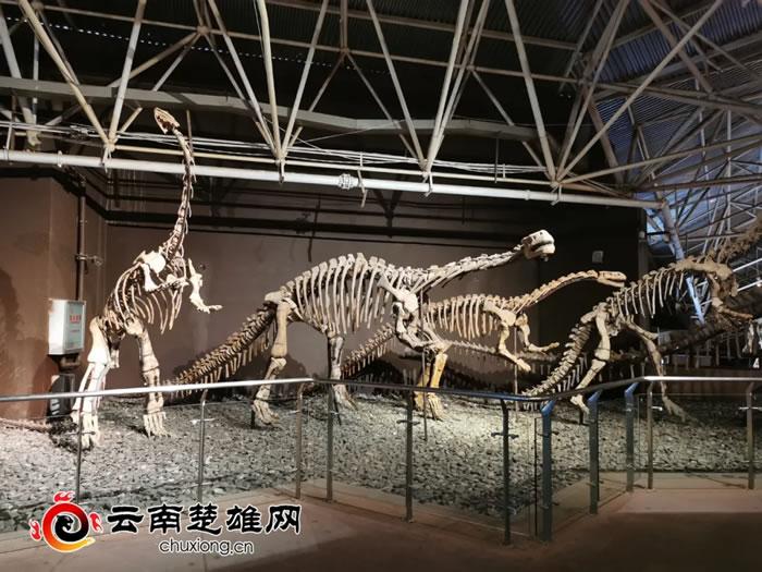 """禄丰恐龙谷博物馆化石修复师这样""""复活恐龙"""""""