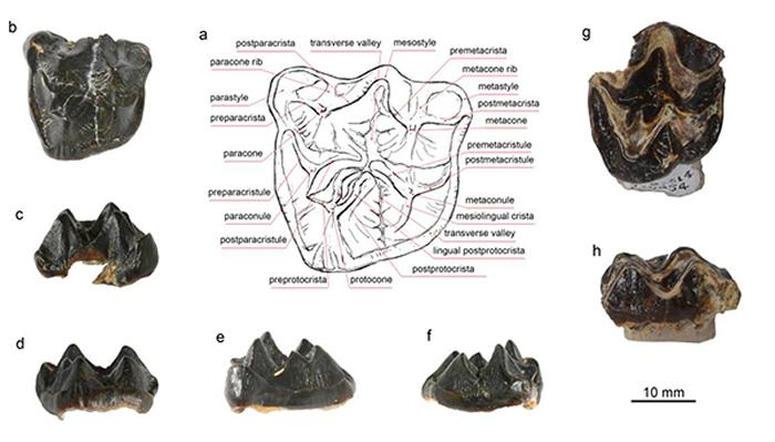 全北界最晚的石炭兽及沟齿兽类的全球扩散