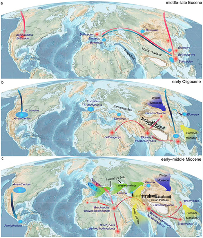 沟齿兽类在全球的演化扩散,及其古地理,古气候以及构造等控制因素。王世骐供图