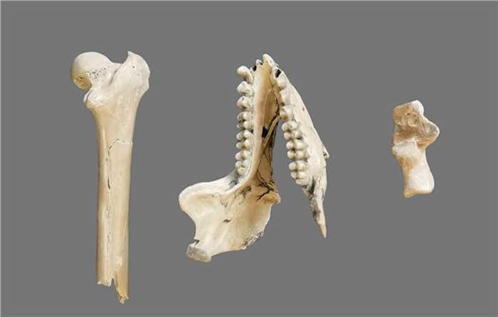 云南昭通水塘坝发现的化石标本提示亚洲金丝猴祖先可能是640万年前的昭通中猴