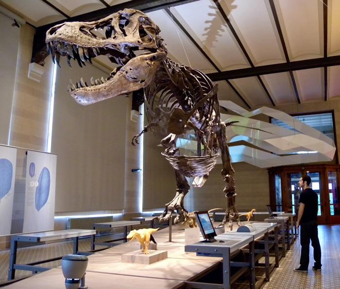 新研究回顾科学家评估恐龙体重的方法 有两种方法得出的结果惊人地相似