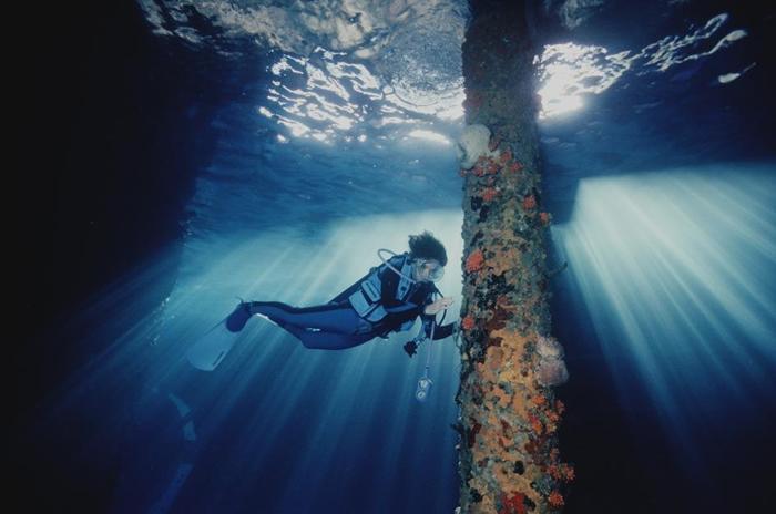 席薇亚.厄尔是一名海洋科学家,也是国家地理的常驻探险家。2017年,她在波奈岛(Bonaire Island)的一座码头附近观察珊瑚的生长。 PHOTOGRAP