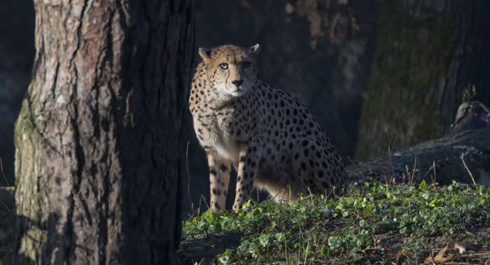 研究数据显示在近12.6万年里共有至少351种哺乳动物灭绝