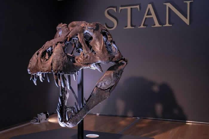 12米长完整霸王龙斯坦(Stan)骨架将在美国纽约拍卖 耗时3年挖掘和复原
