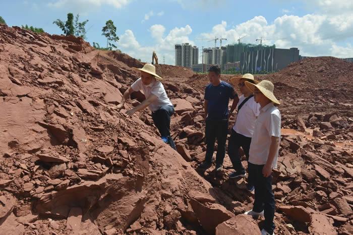 2020年6月,河源联新村发现恐龙蛋化石现场。