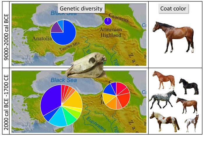 驯养的家马可能并非如先前怀疑的起源于安纳托利亚