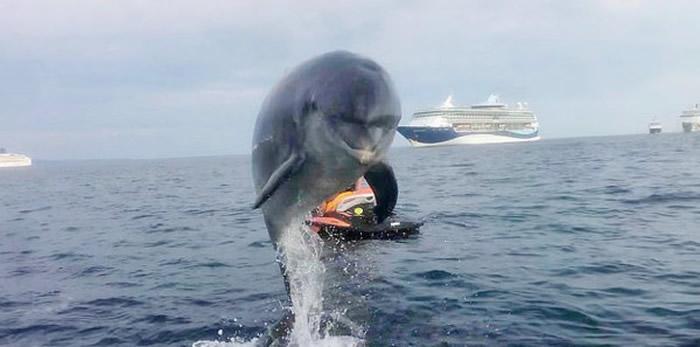 野生海豚「丹尼」游客一见到都会很兴奋,还会对游客们呵呵笑,甚至表演花式跃海跳水。(图/翻摄自DannytheDolphi1/Danny the Dolphin