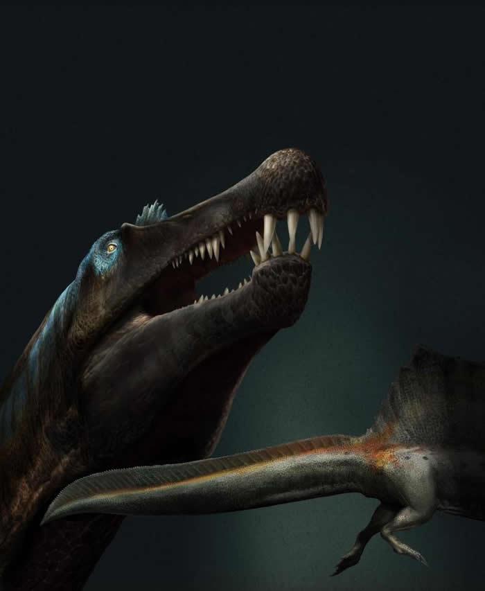摩洛哥撒哈拉沙漠河床发现的大量牙齿化石进一步证实棘龙是一种水生恐龙