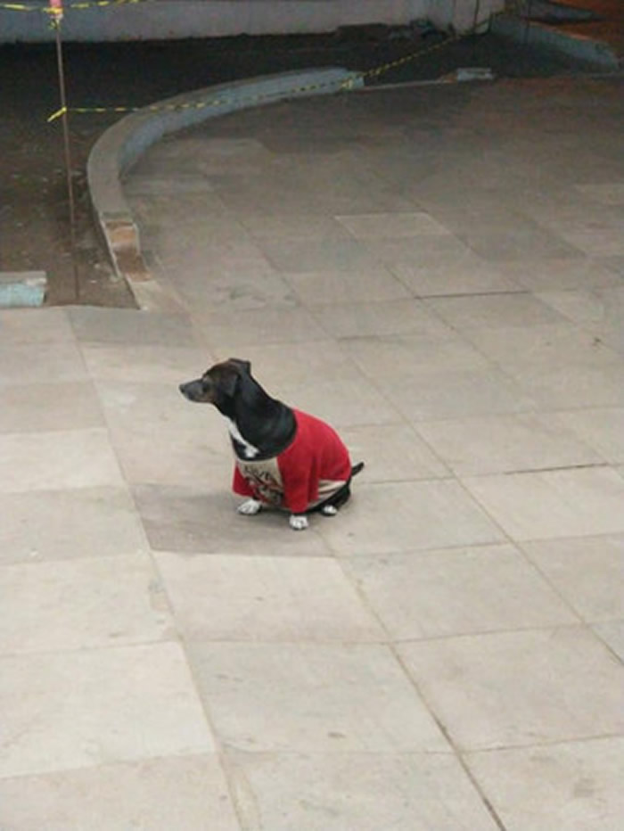 国外饲主遛狗时身体不适紧急送医 忠犬跳上救护车后保险杠跟随