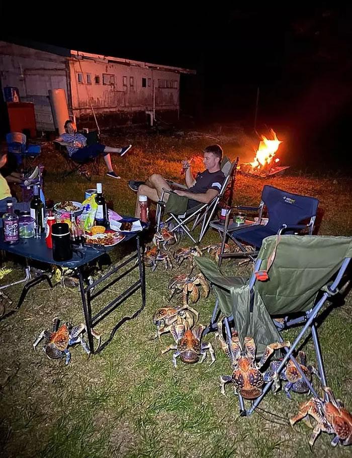 澳洲一家人在圣诞岛露营 烤肉太香引来数十只椰子蟹围观