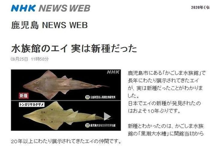 日本鹿儿岛水族馆20年一直养着的及达尖犁头鳐原来是新物种:妖怪及达尖犁头鳐
