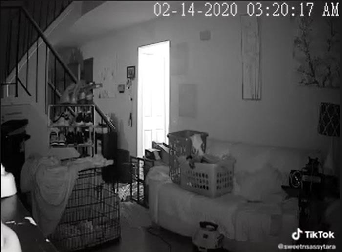 半夜3点狗狗发出狼嚎般吹狗螺声音 主人调视频监控惊闻神秘女童声音