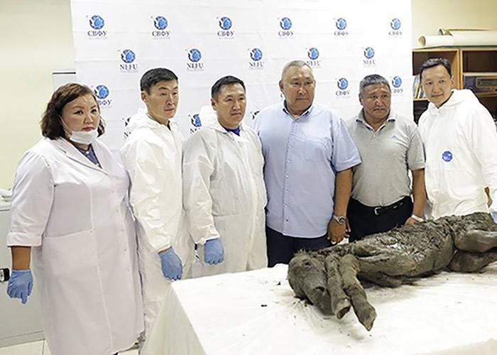 格里戈里耶娃(左一)指发现的史前洞熊遗骸极具意义。