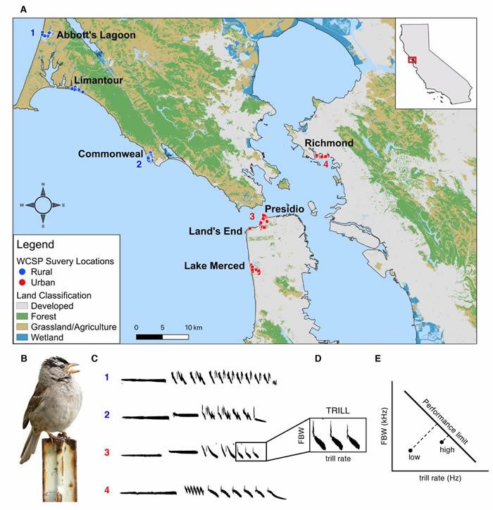 由COVID-19大流行所致停工造成的人为噪音降低使加州鸟类的鸣叫声提高了品质