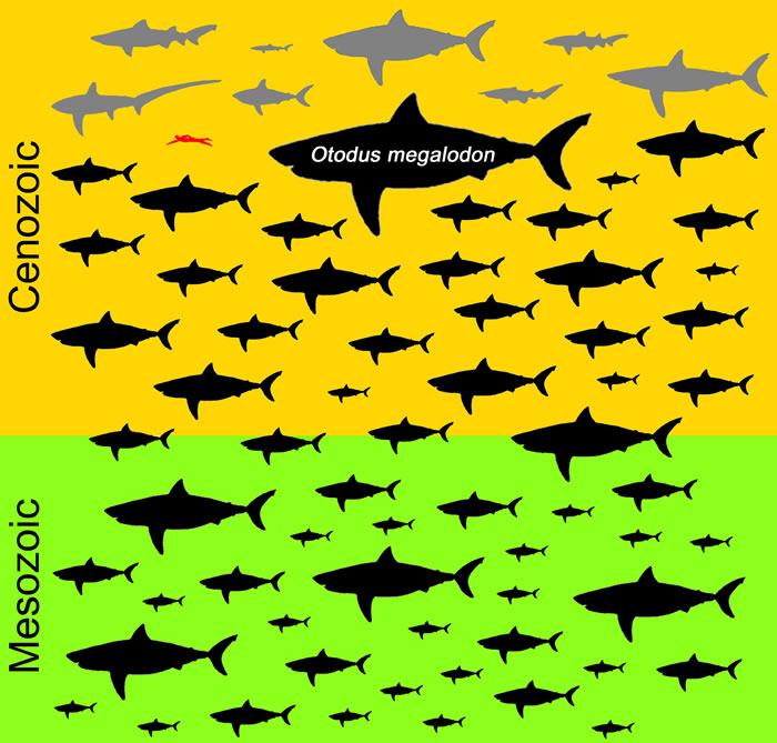 《历史生物学》:巨齿鲨体长达到15米 为海洋中最大鱼类