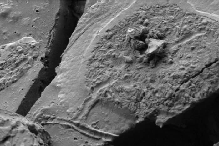 意大利科学家发现公元79年维苏威火山喷发时遇难者的大脑神经元