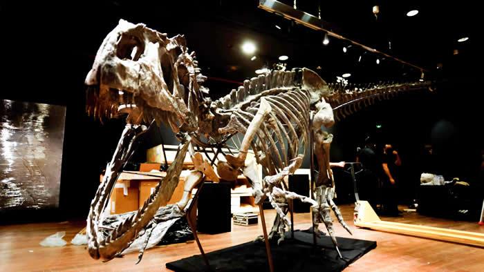 法国巴黎将拍卖罕见异特龙骨架化石