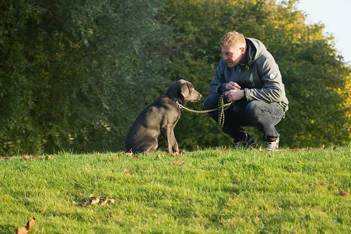 最新研究表明狗真实希望解救处于险境中的人类 但它们必须知道如何去做