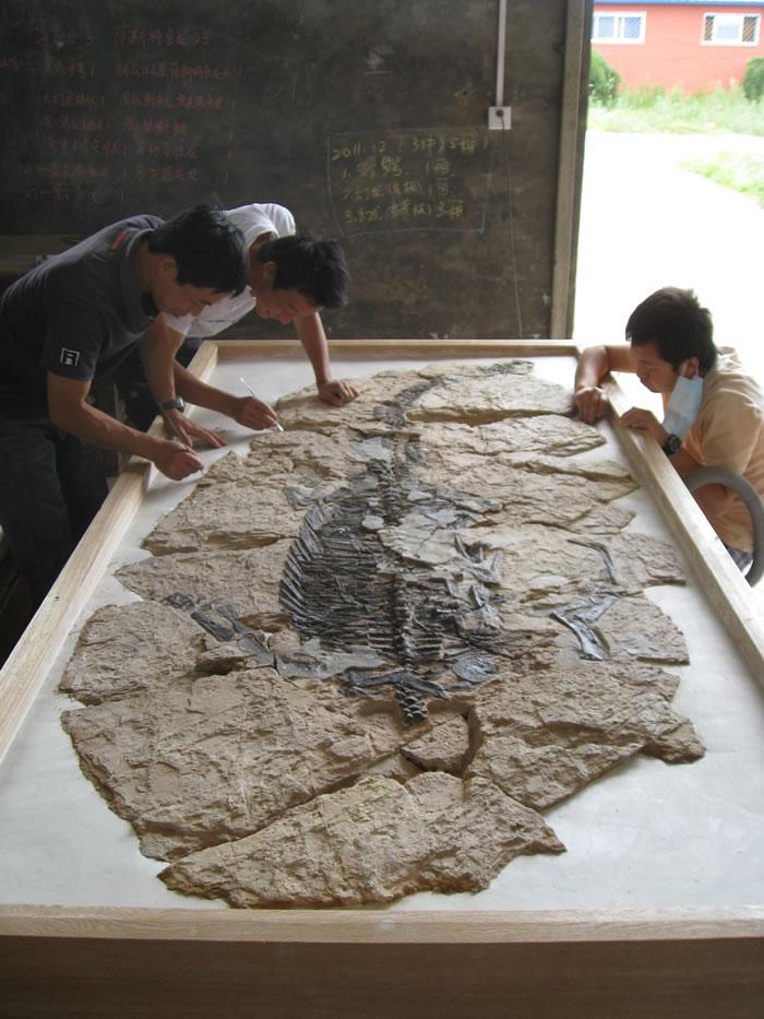 """丁今朝(左一):解救""""海怪""""的人 世界最原始的龟类化石在他手下重现天日"""