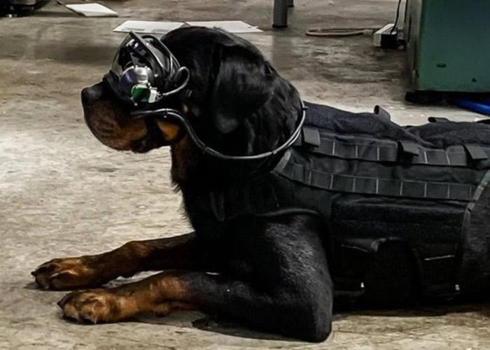 美国陆军研究实验室研发军犬专用AR护目镜 冀远距离发任务指令