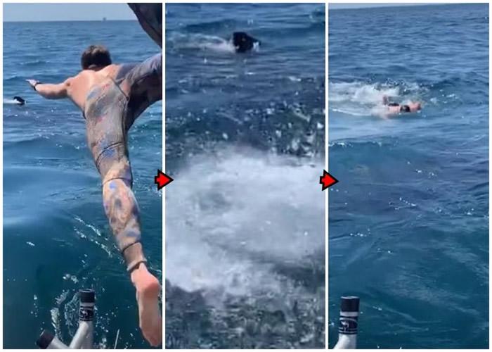 误以为是姥鲨 美国加州少年跳海同游惊见大白鲨