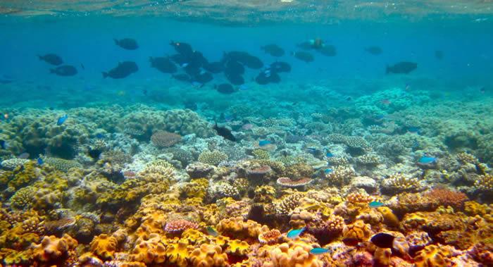 澳大利亚主要自然景点大堡礁在未来几年内可能会被不可逆转地毁坏掉