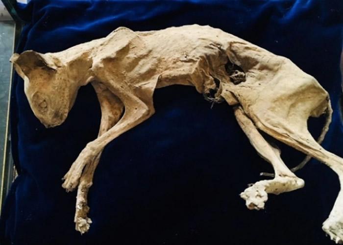 德国柏林艺术家在已故祖母位于罗马尼亚住处的墙壁内发现被视为吉祥物的猫木乃伊