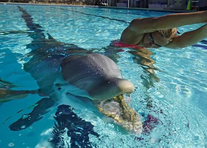美国加州Edge Innovations公司设计的机器海豚有望取代人工饲养的海豚娱乐观众