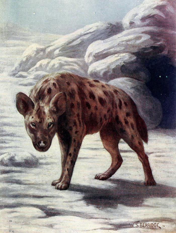 《科学报道》:新研究报道了首例东亚更新世斑鬣狗化石的古蛋白序列
