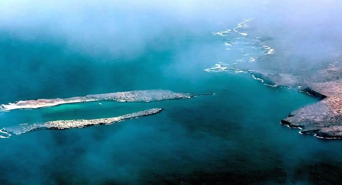 """""""加拉帕戈斯群岛""""的加岛环企鹅和弱翅鸬鹚数量在2020年达到顶峰"""
