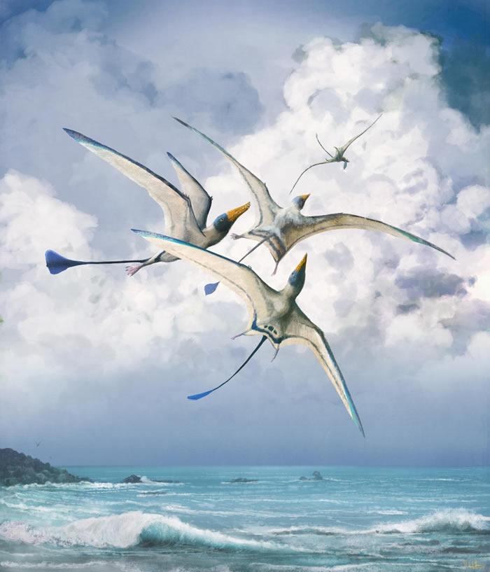英国《自然》杂志:自然选择使翼龙的飞行变得更为高效