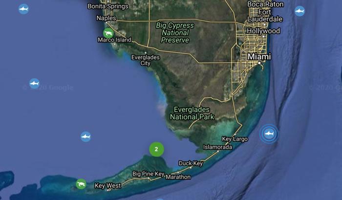在加拿大被标记的全球最大大白鲨在美国迈阿密被发现