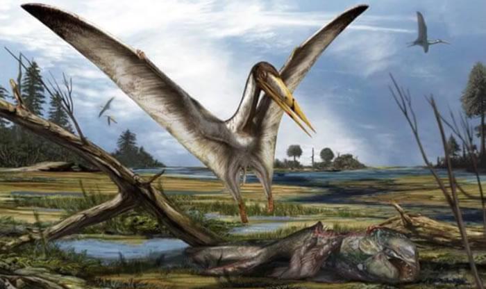 英国朴次茅斯大学抽屉鲨鱼化石中发现6000多万年前的飞行爬行动物翼龙遗骸
