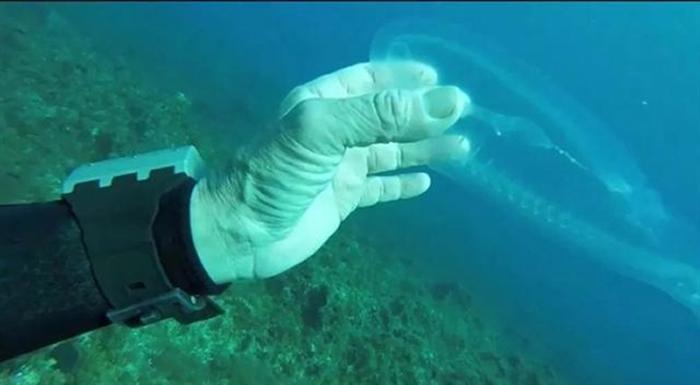 潜水爱好者在马耳他海域潜水时发现一种半透明的神秘海洋生物 专家:樽海鞘