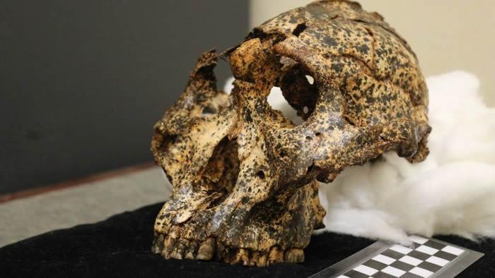 南非洞穴发现200万年前人类近亲罗百氏傍人头骨化石 不同环境进化实例