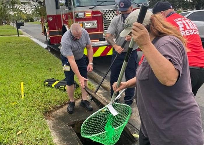 美国佛罗里达州一窝小野鸭掉进雨水渠内 消防员抢救脱险