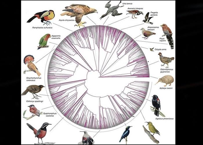 美国史密森尼学会公布首次绘制的363种鸟类基因组成图