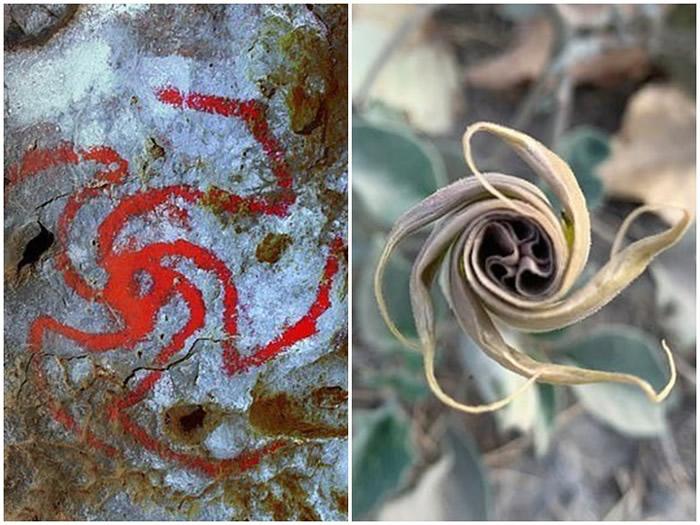 """洞内的""""风车""""壁画(左)可能是描绘曼陀罗花(右)。"""