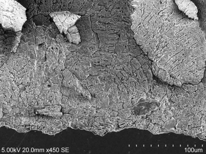 休宁伞形蛋蛋壳球形的锥体(扫描电子显微镜观察)