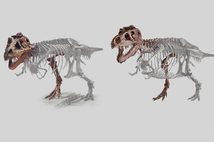 时至今日,科学家们已经可以相对可靠地通过骨骼推断恐龙肌肉的分布情况,有了这些信息,结合骨骼和肌肉的密度,就可以更为精确地计算恐龙的体重了。(图片来源:https