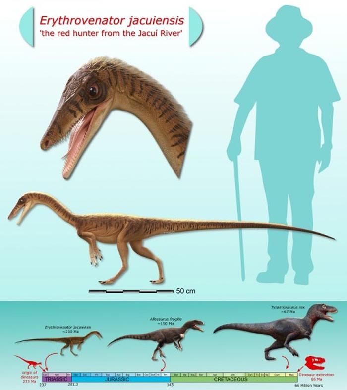 """巴西南部南大河州雅库伊河流域发掘出2.3亿年前的""""雅库伊赤烈龙""""化石"""