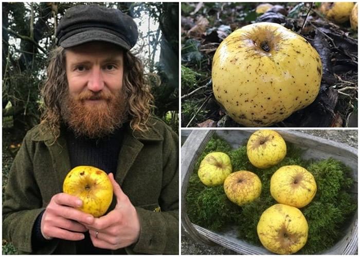 英国威尔特郡纳德山谷园艺爱好者跑步时在林地偶然发现新品种苹果