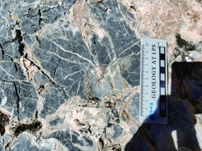 当惹雍错二叠系剖面中的珊瑚化石