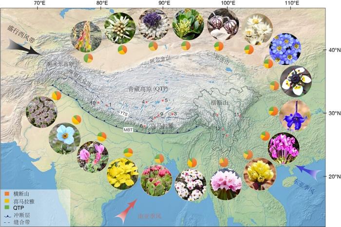 西藏-喜马拉雅-横断山地区地形图。图中照片分别代表了选择的18个类群(顺时针从上到下依次为:大黄属,火绒草属,风毛菊属,柳属,石竹目,香青属,龙胆属,虎耳草属,