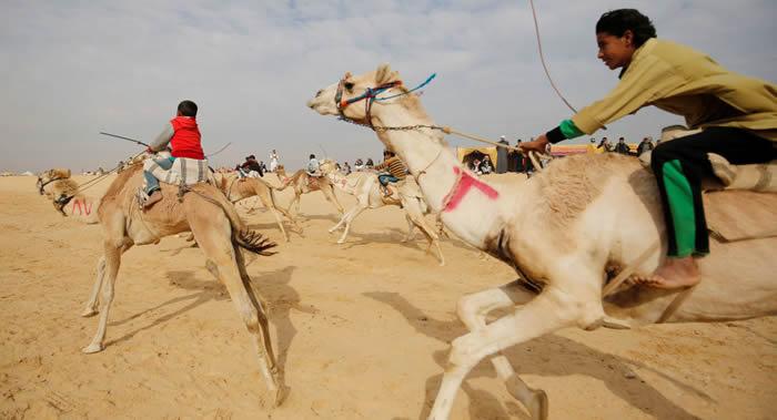 赛骆驼已被列入联合国教科文组织非物质文化遗产名录