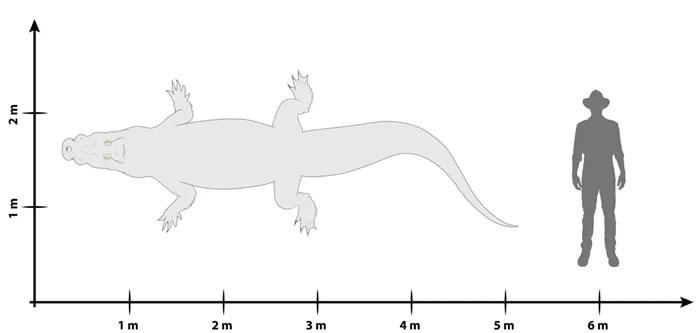 """""""沼泽之王""""!澳大利亚巨型鳄鱼化石被正式命名为""""Paludirex vincentix"""""""