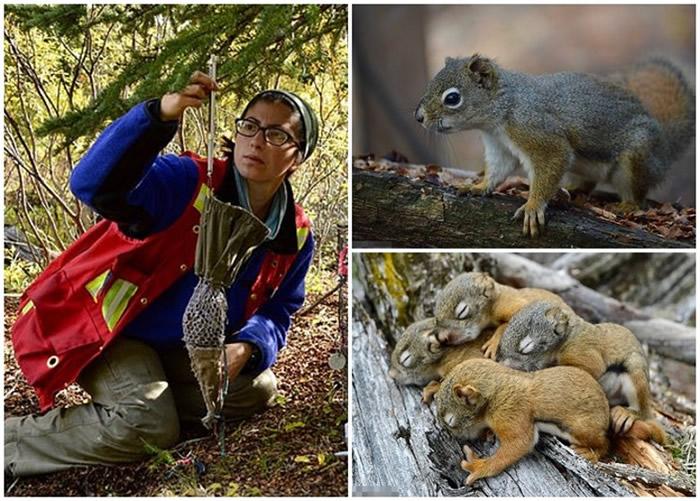 英国埃克塞特大学动物学家研究发现愿群居的松鼠寿命更长