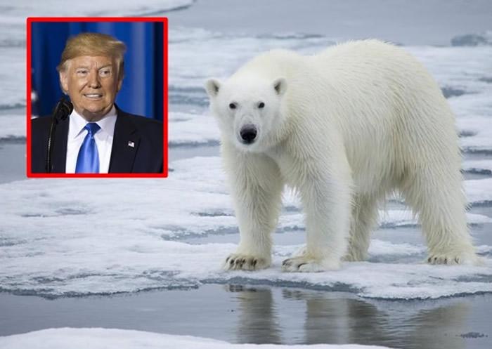美国总统特朗普拟准钻探保护区 恐进一步将北极熊推向灭绝