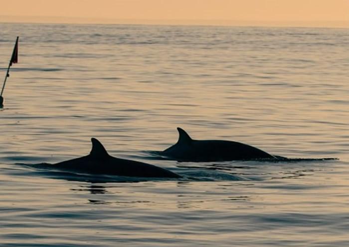 墨西哥西部太平洋发现3条喙鲸 疑似发现新品种