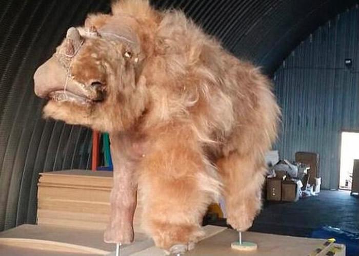 2014年发现的7个月大披毛犀幼崽遗骸。